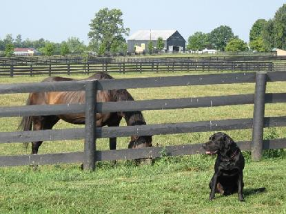 Luke enjoys his visit with the retired Thoroughbreds at Dream Chase Farm.